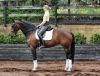 Completely Imported bloodlines make This Impressive mare A Steal for Somebody In The market For