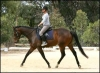 News Just In - Ideal Eventing or Dressage Horse