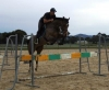 URGENT SALE -Talented Mare ability to excel in Dressage, Eventing or Show Jumping