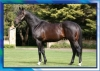 # I Was Champion 3YO Sprinter In Ireland After My