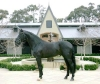 Shiraz Black (licensed Oldenberg) Has Enjoyed A Glittering Dressage Career