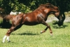 THE BEST PERFORMED 2 YEAR OLD SON OF ENCOSTA DE