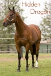 Queensland's Lyndhurst Stud Will Stand Exciting Young Stallion Hidden Dragon